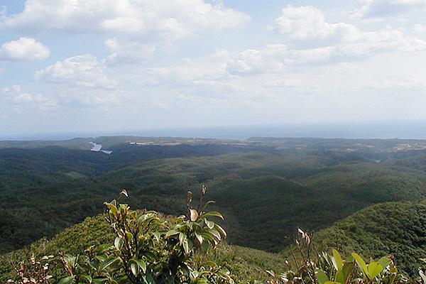 やんばるの森トレッキング 沖縄体験トレッキング