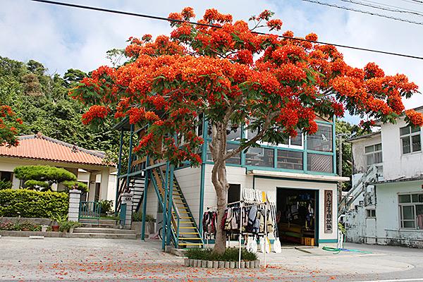 やんばる自然塾とは 沖縄 体験