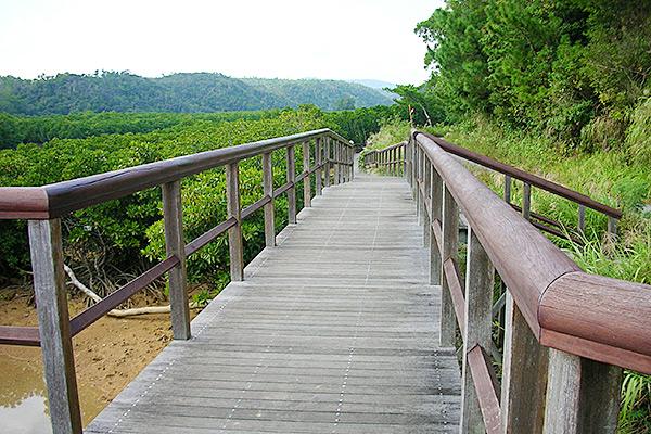 やんばる自然塾 慶佐次川 沖縄体験ツアー