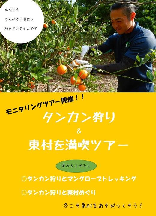 冬限定!タンカン狩り モニタリングツアー開催!